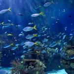aquariums-bg_s01[1]