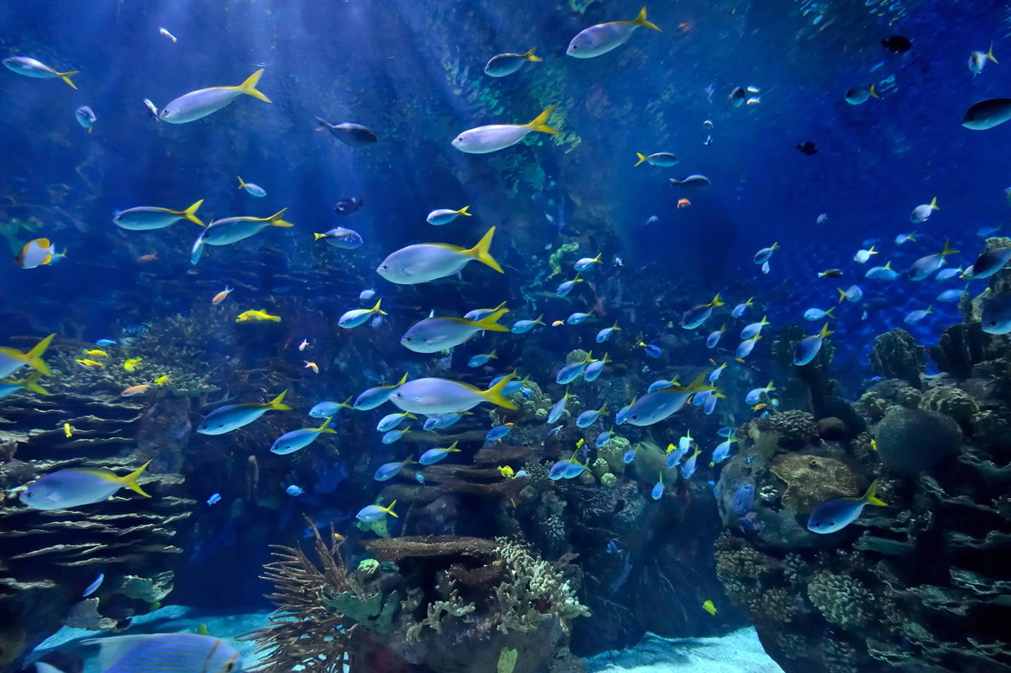 Gallery barrier reef for Aquarium video