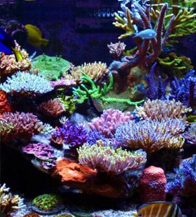aquariums-pic