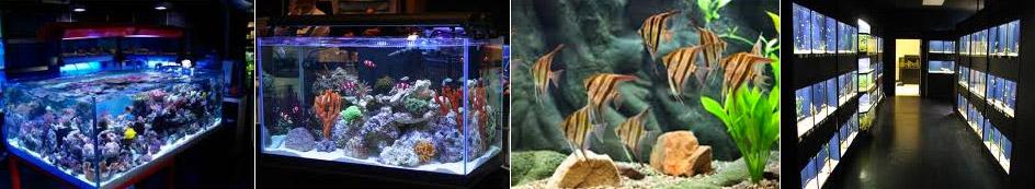 aquariums-row
