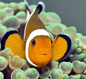 Saltwater and Marine Fish