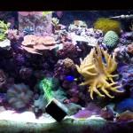 23724d1123702916-saltwater-aquariums-aquarium3[1]