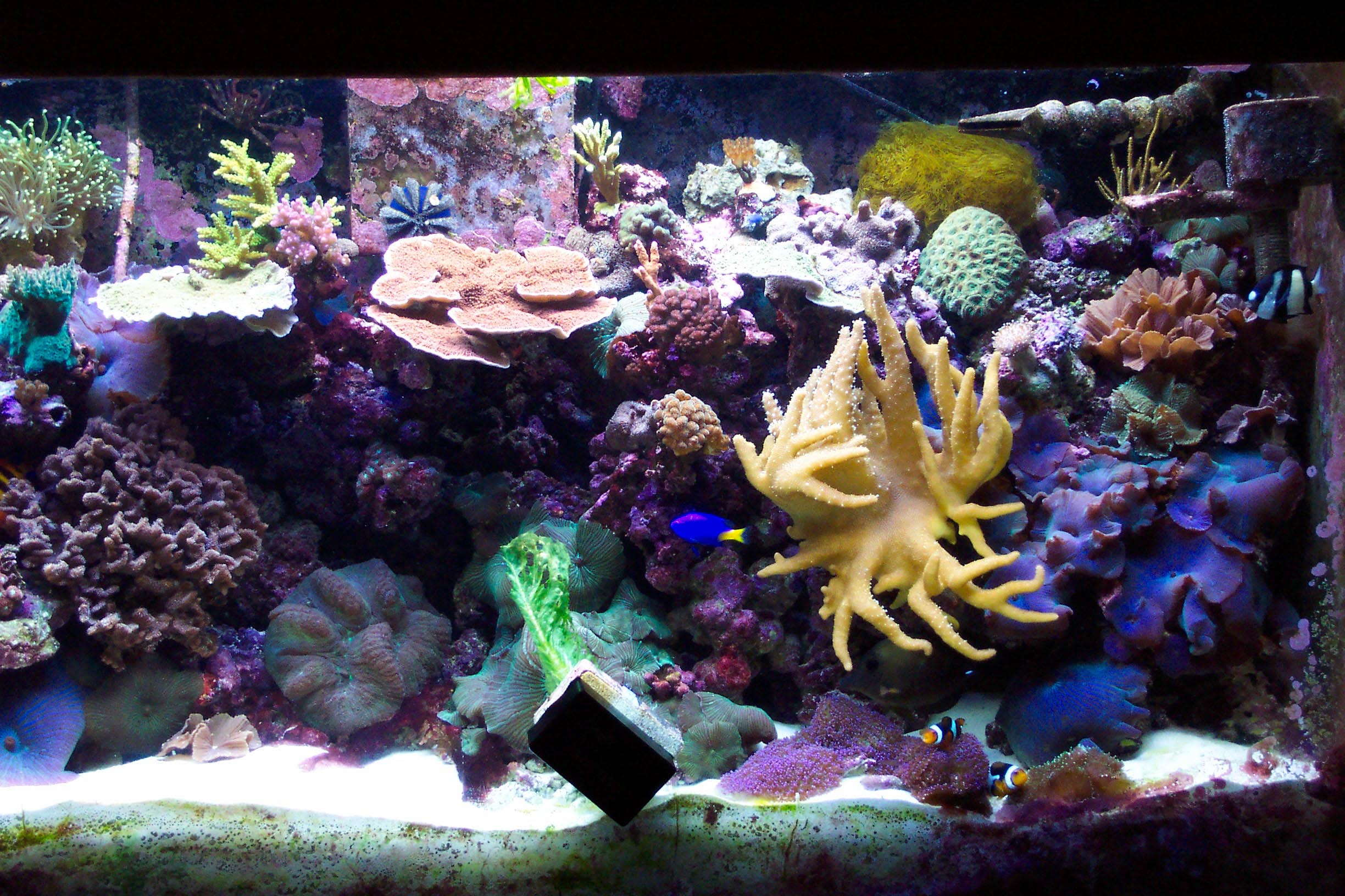 Gallery barrier reef for Reef aquarium fish