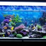 Aquarium-corals-reef[1]