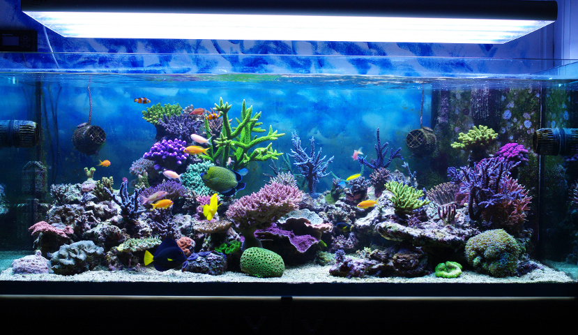 Aquariums on pinterest aquarium home aquarium and fish - Fotos de acuarios decorados ...