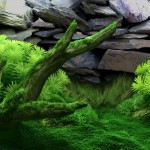 DreamAquarium_Background_MossAng-15[1]
