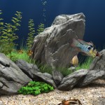 aquarium-freshwater-fish-for-sale[1]