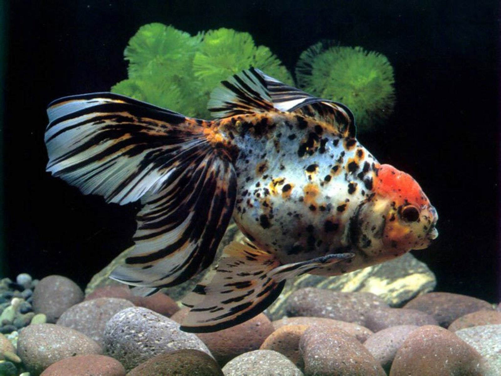 Fish Aquarium - Popular aquarium fish high quality_263679 1